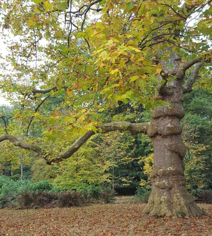 Autumn Walk 's-Graveland