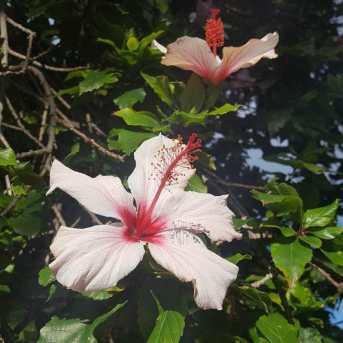 botanic treasury tenerife