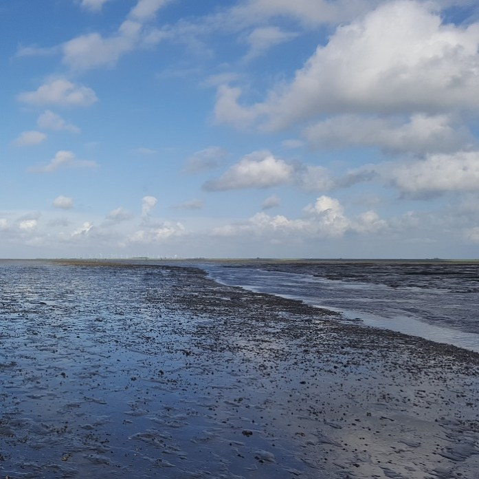 waddenland clouds