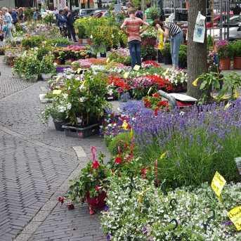 Utrecht Flower Market