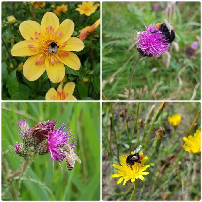 Planten Voor Bijen.Zo Zorg Je Voor Meer Wilde Bijen In Je Tuin Dailygreenspiration