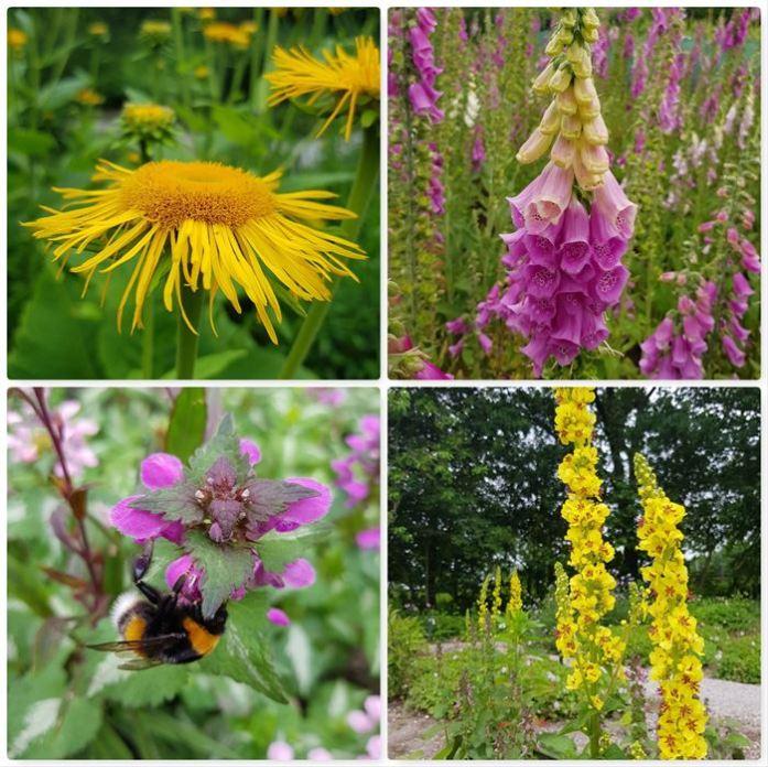 Planten Voor Bijen.Bijenplanten Scoren In De Fryske Hortus Dailygreenspiration