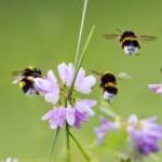 Bijen Tellen