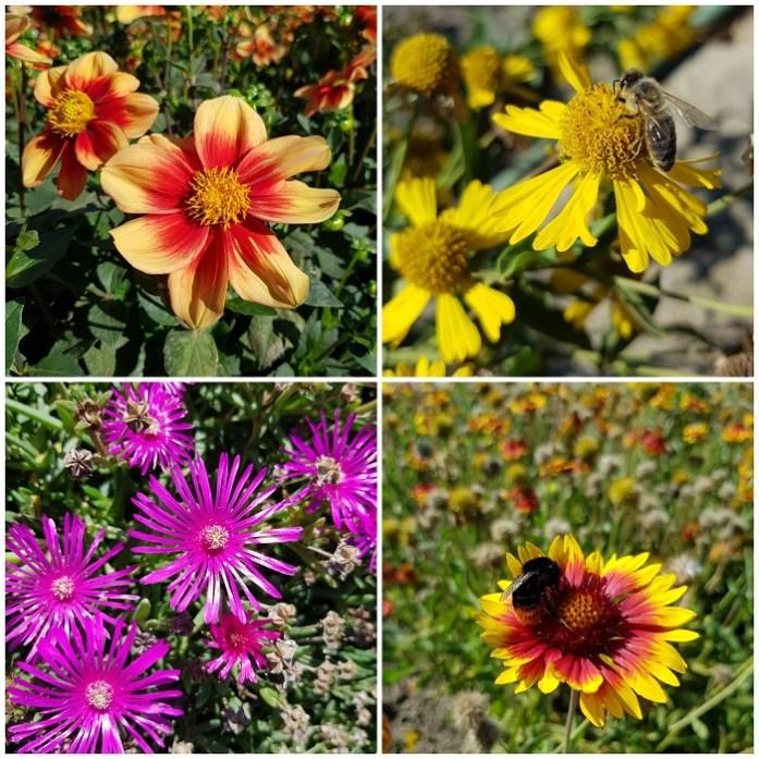 bloemen in de geurtuin