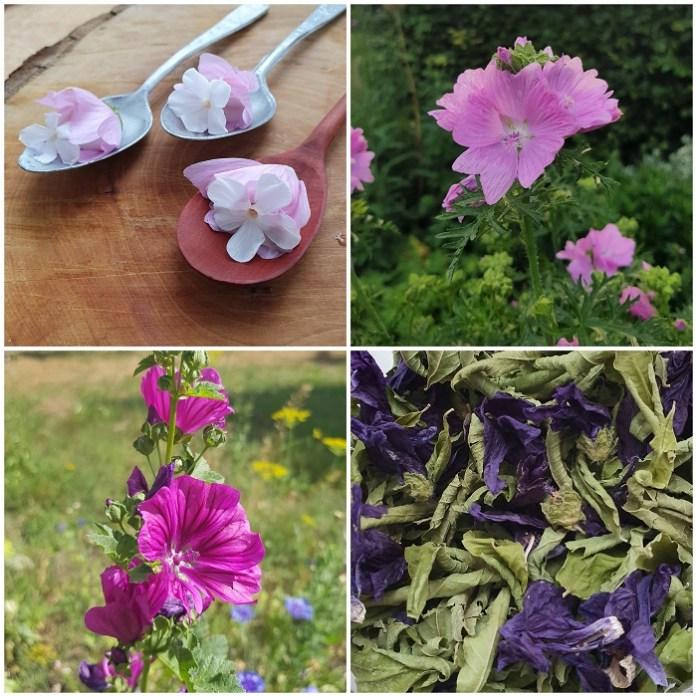 eetbare bloemen zoals malva