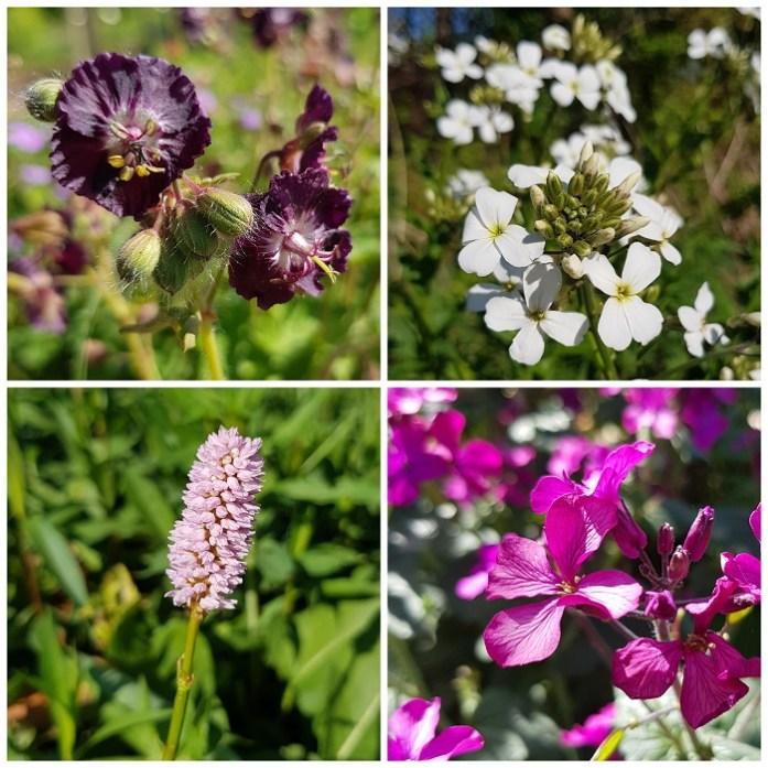 planten voor vlinders
