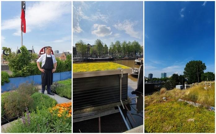 tuinieren in de stad op daken