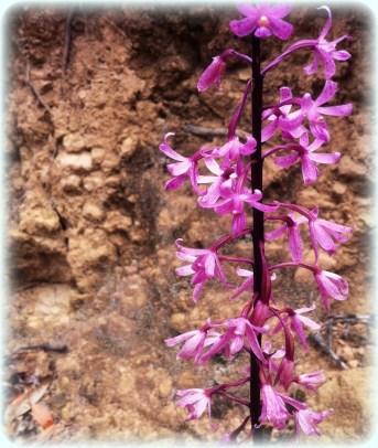 flowerrainforest2