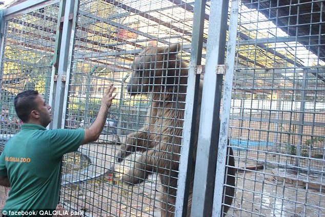 Bear in Zoo Tears Off 9 Year Old Boy's Arm And What He Did Next Will Shock You