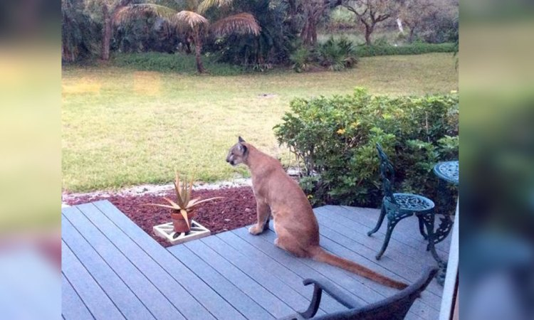 After His Dogs Refused To Stop Barking, Man Spots The Terrifying Creature In His Backyard