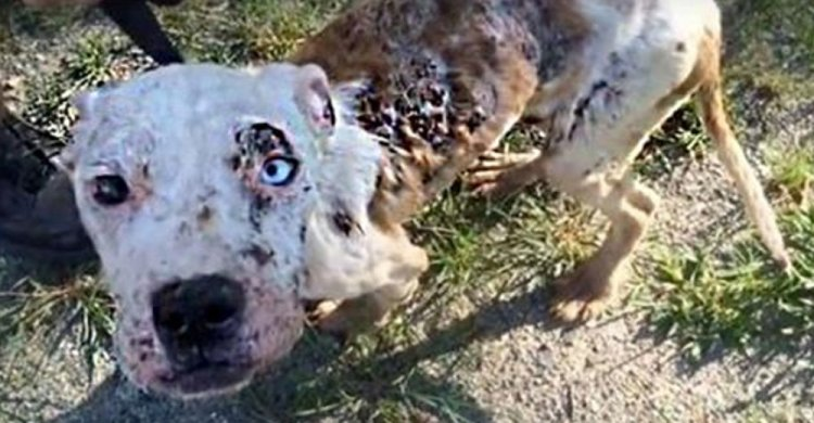 Rescuers Left Heartbroken After Spotting Severely Neglected Pup With Raw Sores Over His Body