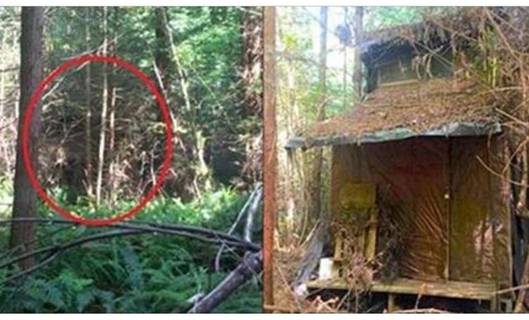 Ranger Spots Hidden Cabin In Woods, Finds Mystery Inside [PHOTOS]