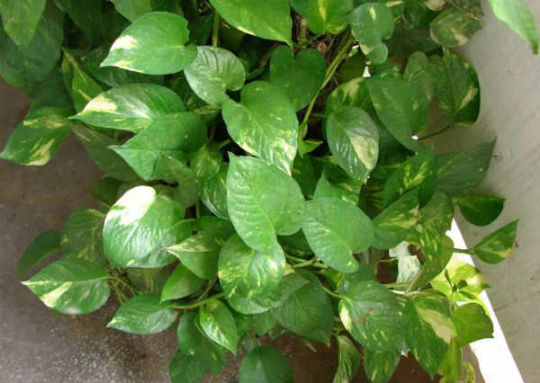 10 Important Feng Shui Plants To Invite Happiness & Wealth