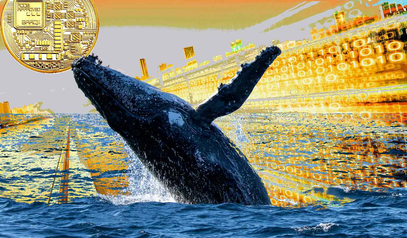 Crypto Whales Are Quietly Accumulating This Altcoin at an Unprecedented Rate, Says Santiment | The Daily Hodl