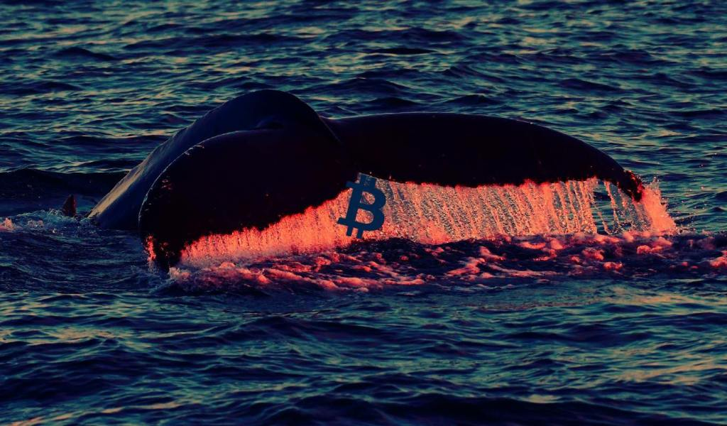 2,000,000 in Bitcoin Suddenly Moves in Massive Synchronized Crypto Whale Transfers