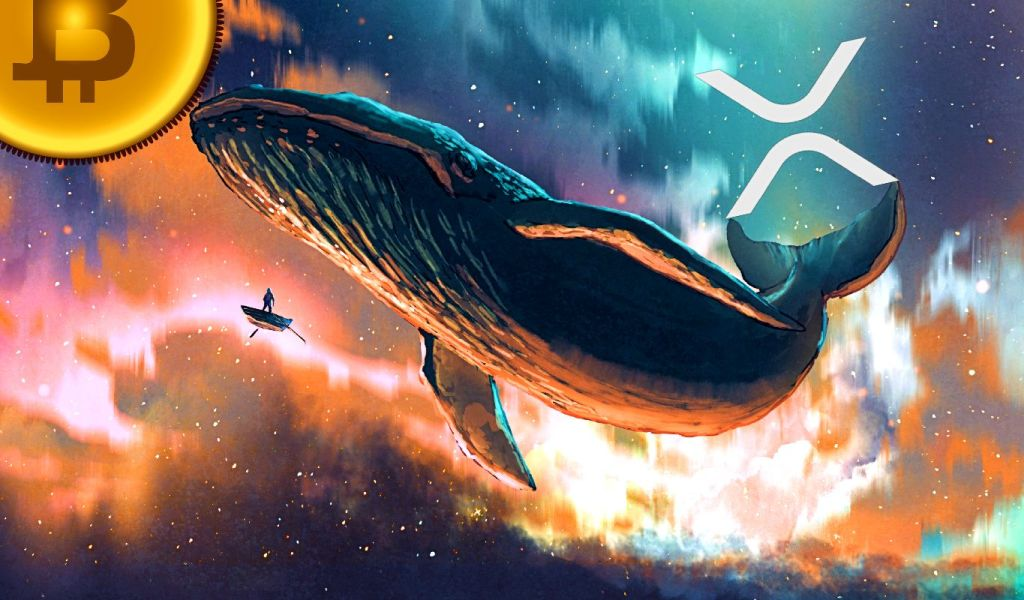 Bitcoin and XRP Whales Are in Buy Mode, Five Altcoins Appear Ready To Rally: Santiment