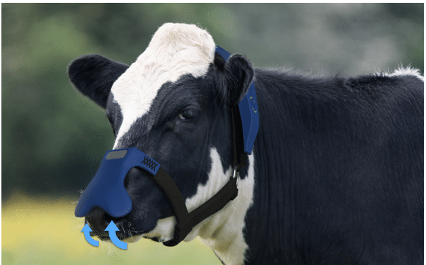 UK Company Makes Mask For Cows