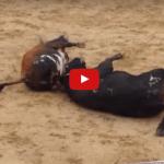 toros-mueren-instantaneamente-al-chocar