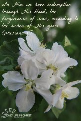apple blossoms with watermark