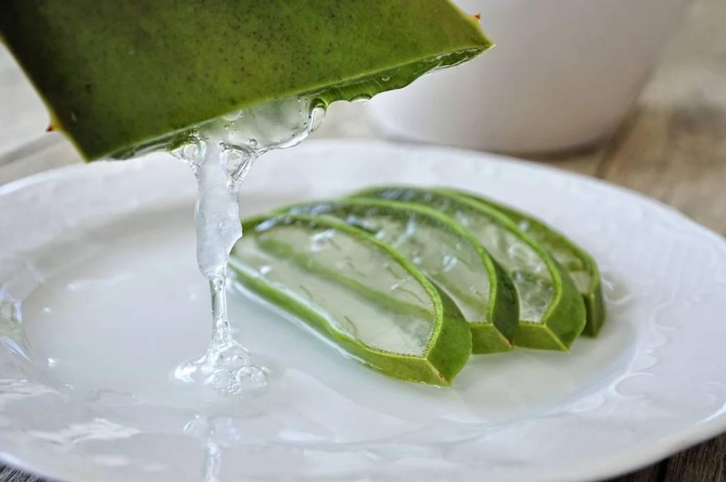 Aloe vera: benefits and uses of aloe vera 3 - Daily Medicos