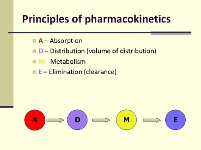 What should you know about pharmacokinetics as a pharmacist? 3 - Daily Medicos