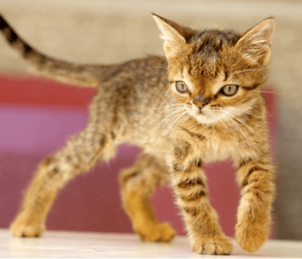 Down Syndrome In Animals: A Myth Or A Reality? 5 - Daily Medicos