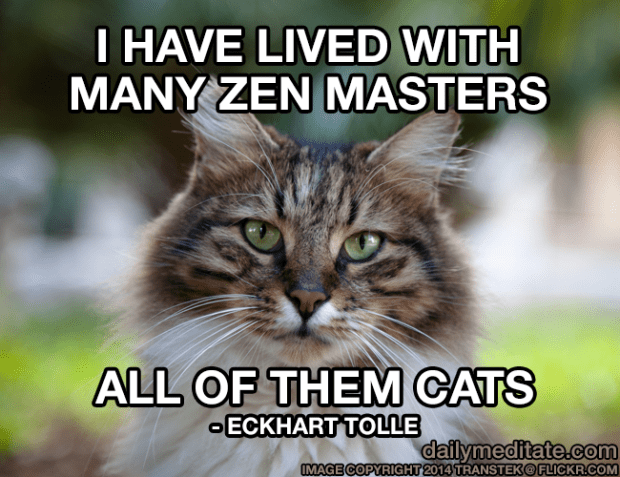 """I have lived with many Zen masters, all of them cats."" - Eckhart Tolle"