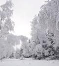 Blizzard Meditation And Warm Tea