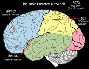 """""""Task-Positive Network"""" derivative of work by Mysid"""