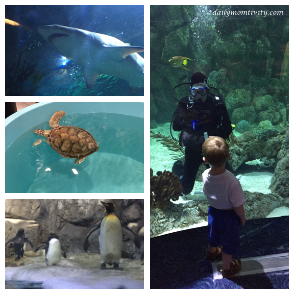 Aquarium at Moody Gardens, Galveston