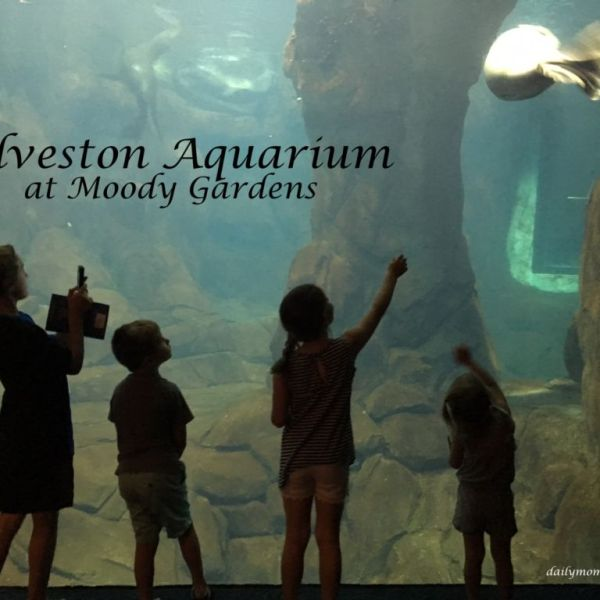 Galveston Aquarium at Moody Gardens