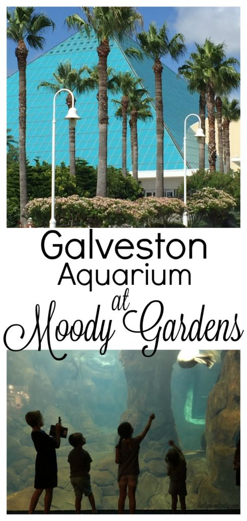 The best place to take your kids when in Galveston is to Moody Gardens. The aquarium there is so much fun!