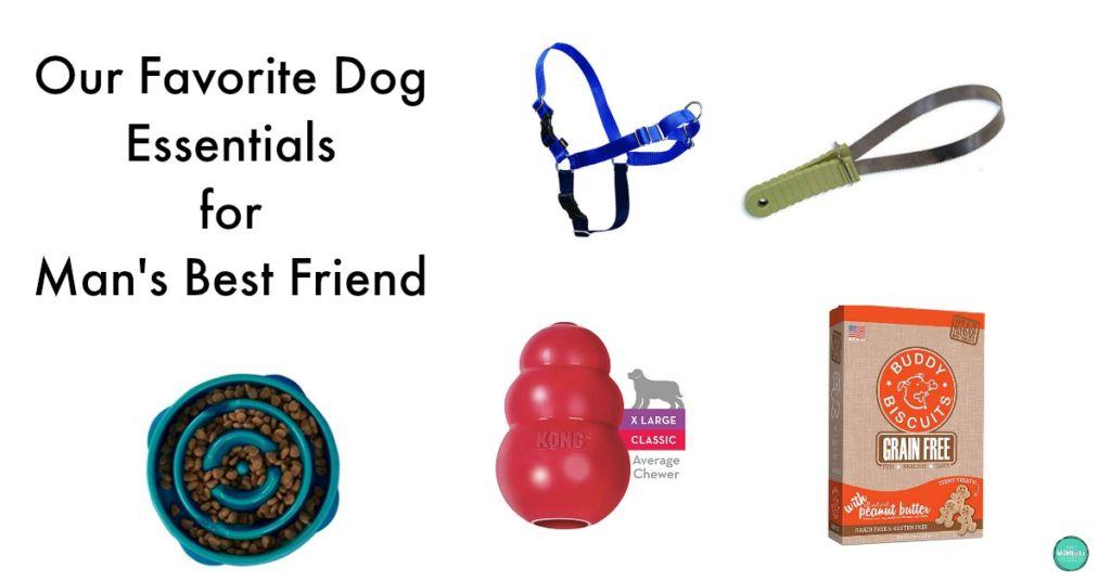 favorite dog essentials for man's best friend