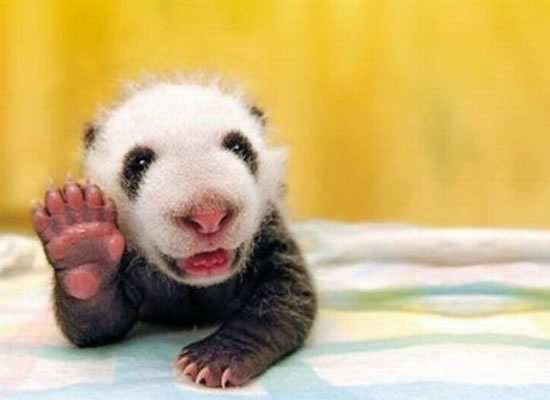 Image result for picture of a baby animal