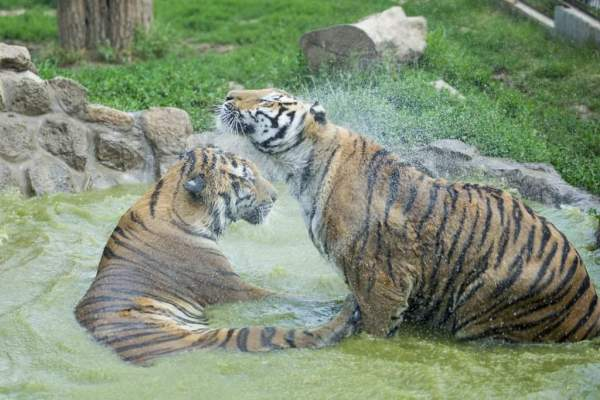 Heat alert in Hungary – The animals are playing with water ...