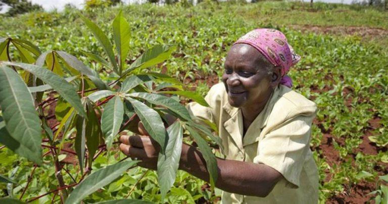 Nigerian govt disbursesN61m to farmers in Ondo