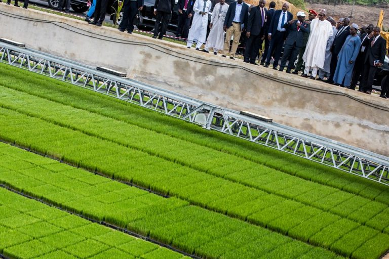 Buhari opens Africa's first rice seedling plant in Calabar