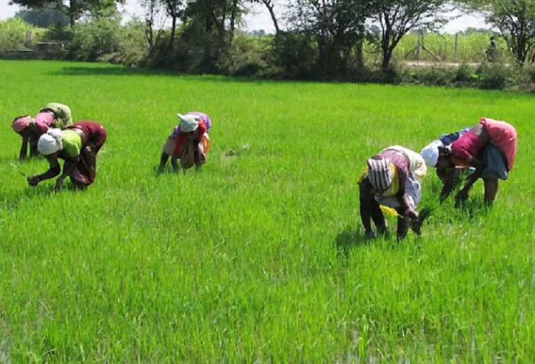 SMEDAN urges women to form cooperatives to access FG's agric loans