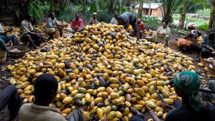 Netherlands big market for Nigeria's cocoa, buys 47% of commodity – NEPC