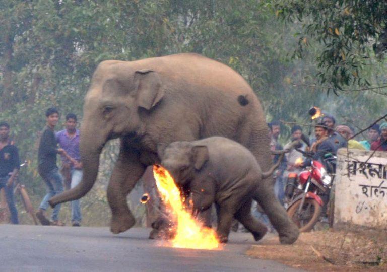 293 elephants, 96 people killed in Sri Lanka's human-elephant conflict