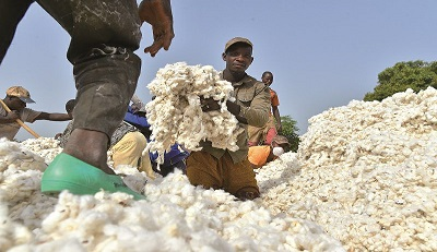 Nigerian govt disburses N6.4bn loan to cotton farmers in Gombe, Adamawa, Taraba