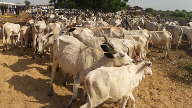 COVID-19 pandemic affecting our trade – cattle breeders