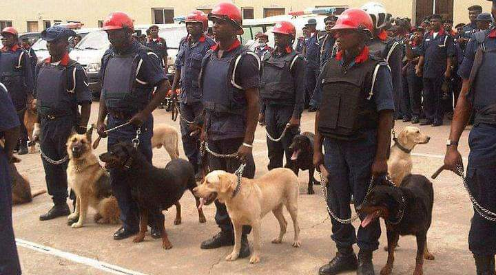 Ondo Guber: NSCDC deploys 7,079 personnel, 60 dogs - Daily Nigerian