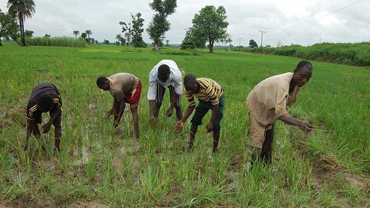Farmers Abia