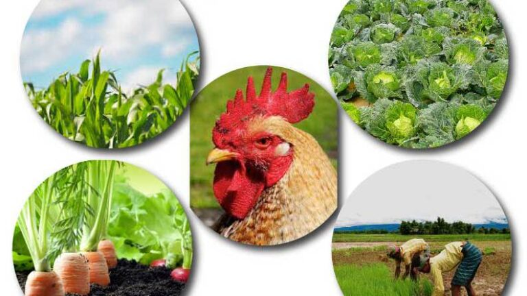 Nigeria leading West Africa in organic agriculture, says ECOWAS official
