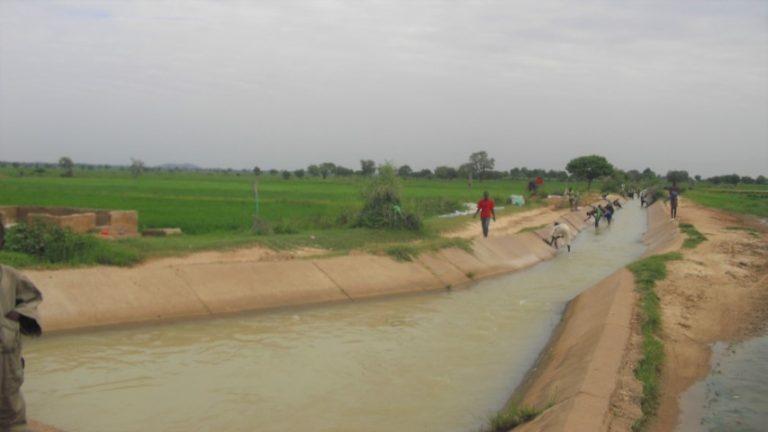 Irrigation: Kano Govt releases water from Watari Dam