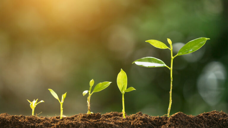 Agric firm uncovers fertiliser blends for augmenting nutrient deficiencies in plants