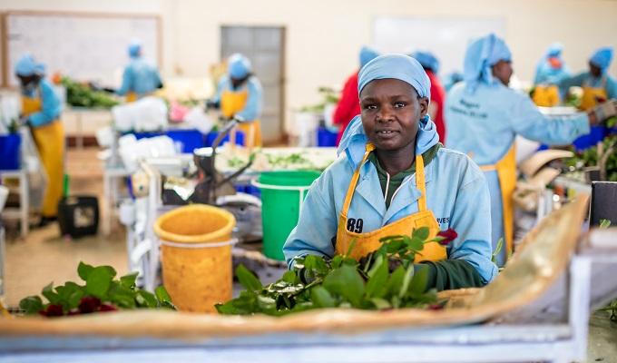Nigerian govt inaugurates Moringa Tea/Oil processing factory in Taraba