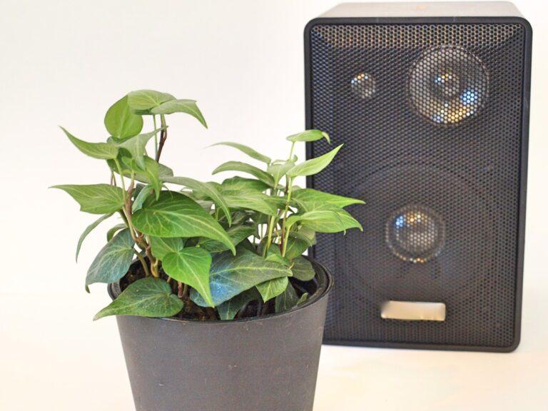 Music can help plants grow well, says Nigerian professor