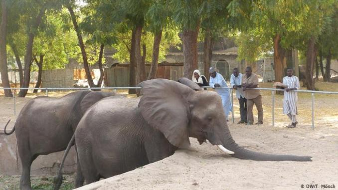 Borno govt restocks Maiduguri Zoo to woo tourists, visitors